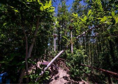 Area-Picninc-alberi-Tenuta-Bocchineri