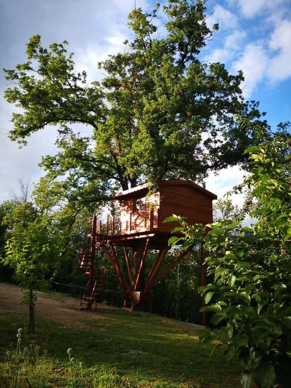 Casa sull'albero vista da lontano