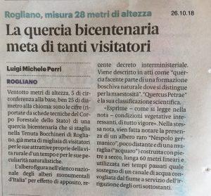 Albero Monumentale: Quercia Secolare di Tenuta Bocchineri Calabria